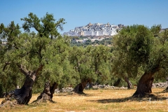 Ostuni-framed-with-Olive-trees